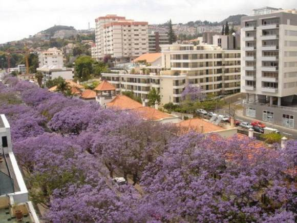 Apartamento en Madeira, alquiler de casa en Funchal.