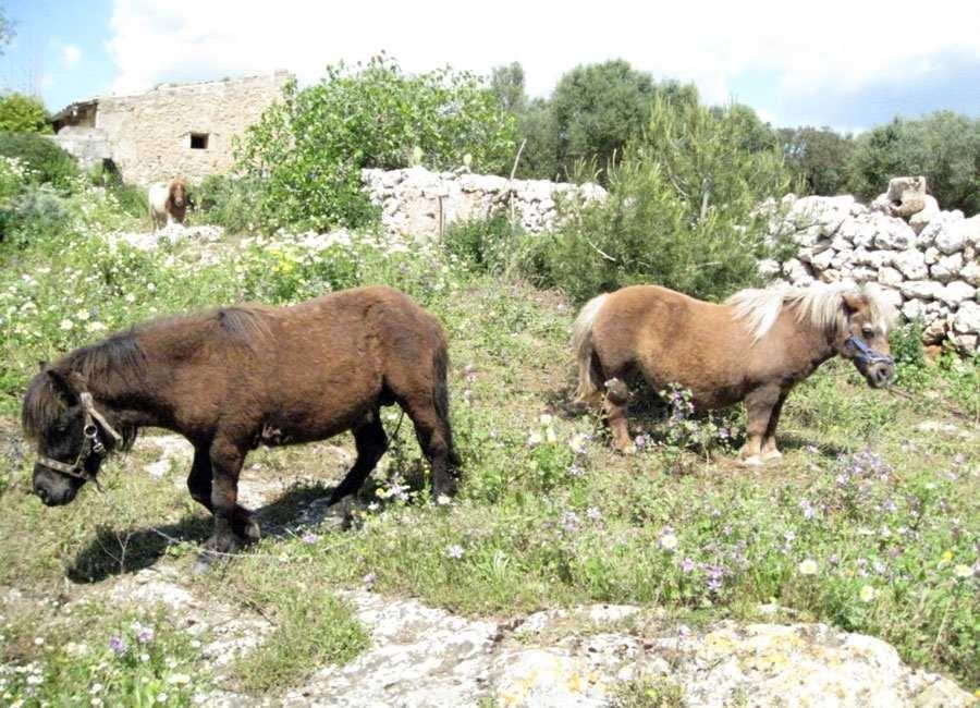 Apartamento rural Es Mirador, Finca Sa Cova Vella, Manacor, Mallorca.