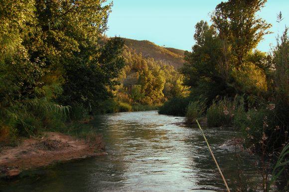 Bosque de ribera del Parque Natural de las Hoces del Cabriel
