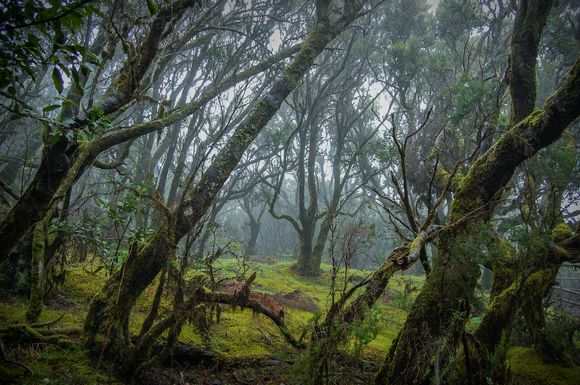 Bosque de Laurisilva del Parque nacional de Garajonay